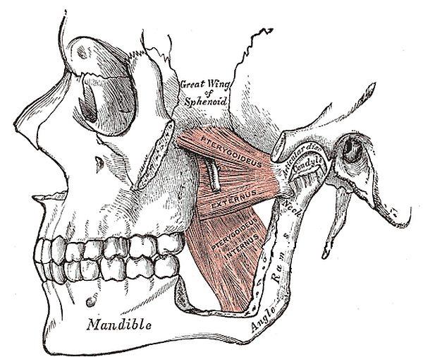 Cranio-Mandibulaere-Dysfunktion-CMD-Kiefergelenk-Schmerzen