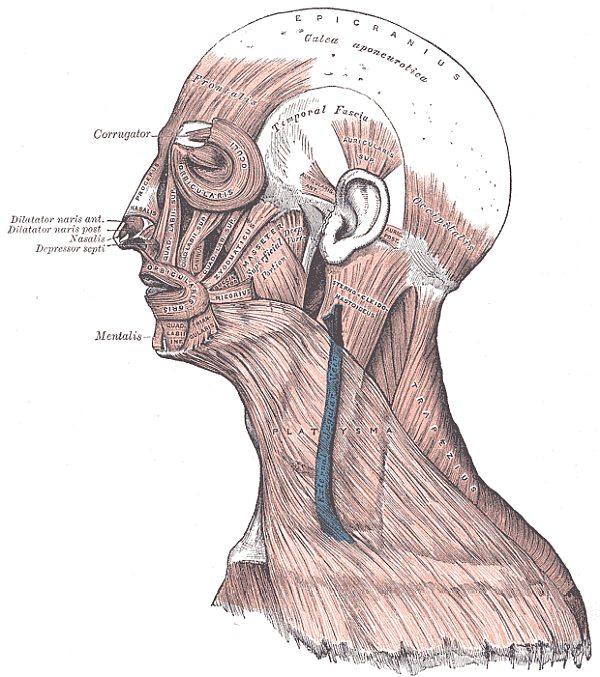 Kiefergelenk Schmerzen Kieferorthopädie